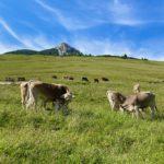 Trentino Alto Adige: Mezzano, San Martino di Castrozza, Passo Rolle e Passo Oclini
